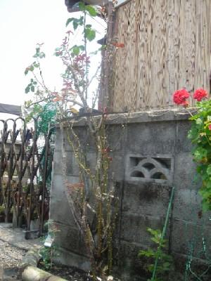 nisigawa20080527.jpg