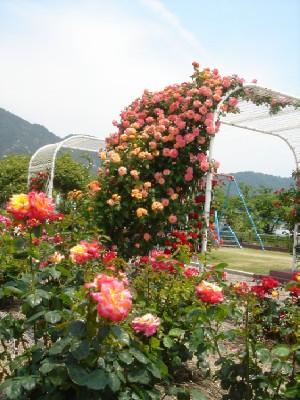 yoshiumibarakouen200802.jpg