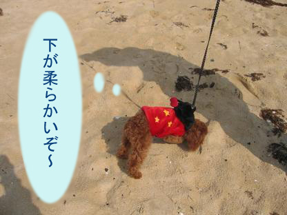 砂浜 くんくん