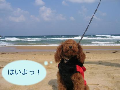 砂浜 おすわり