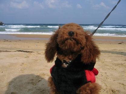 砂浜 おすわり2