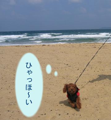 砂浜 ダッシュ