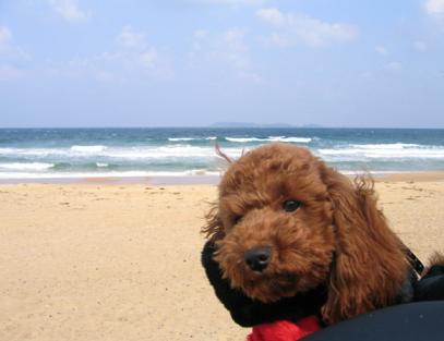 砂浜 アップ