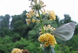 6.29花と虫07