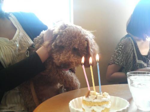 誕生日ケーキと