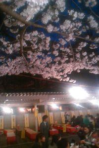 宴会の人々と桜