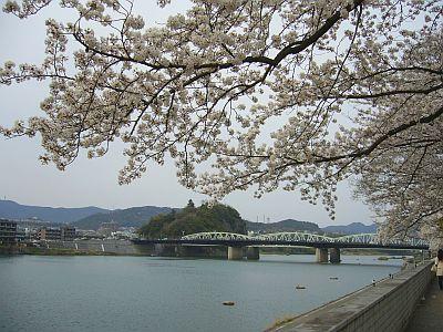 桜と川と橋