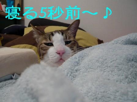 一応女の子3