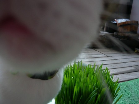 草むしり1