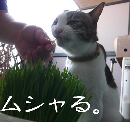 草むしり4