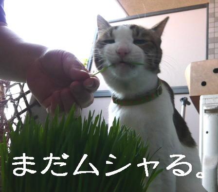 草むりり5