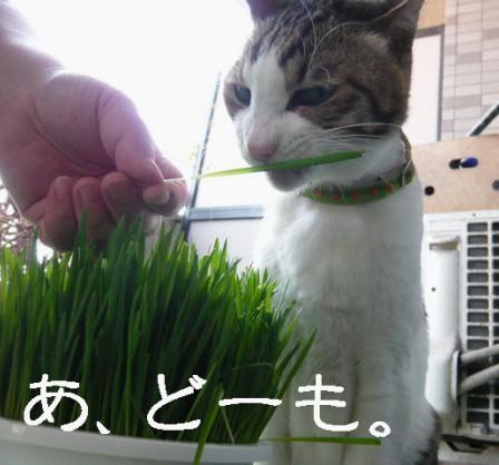 草むしり7