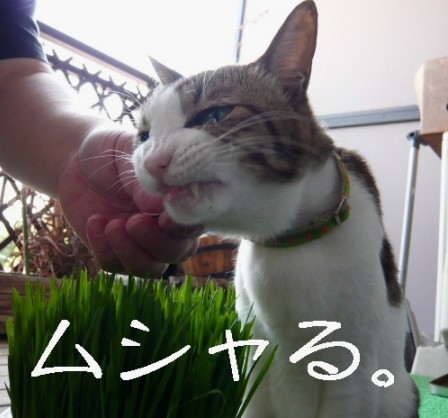 草むしり8