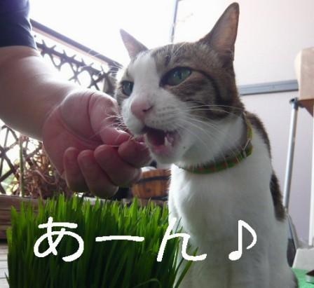 草むしり9