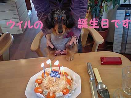 ウィルちゃんのお誕生日♪