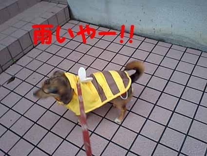 雨いやー!!