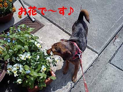 お花で~す♪