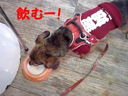 飲むー!!