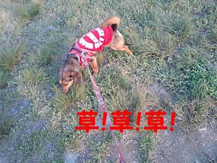 草!草!草!
