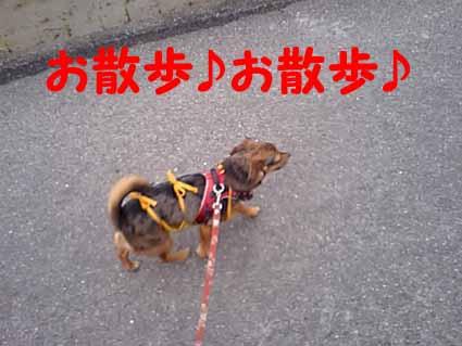 お散歩♪お散歩♪
