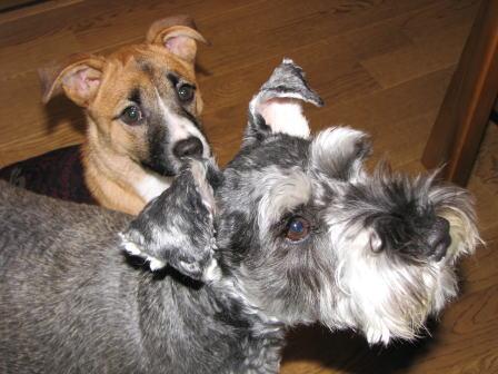 ルゥと先輩犬