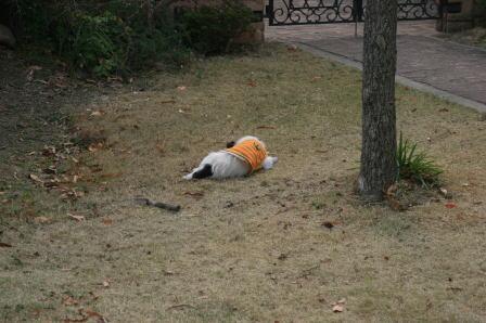 庭で眠ってしまったもも(1)