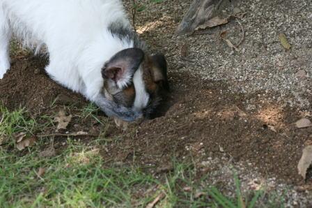 穴を掘るもも(2)