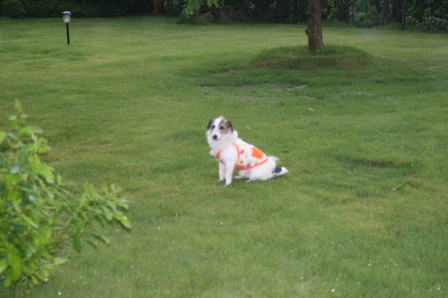 芝生の上に座り込んしまったもも(2)