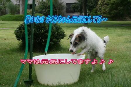 暑中お見舞いのハガキ(2)