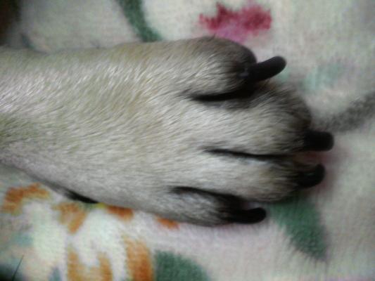 由紀夫の手