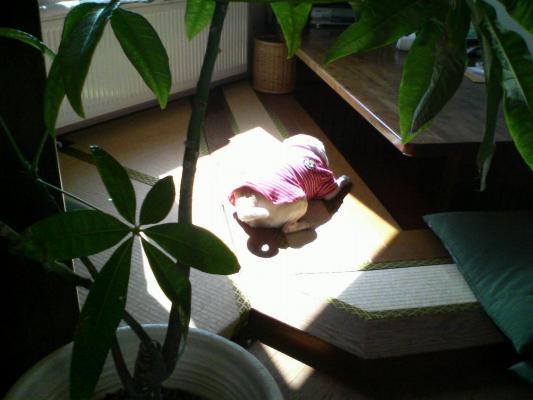 日だまりで横寝