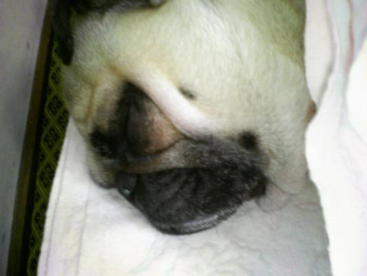 シーツの中で寝る由紀夫