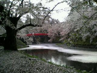 橋と堀と桜