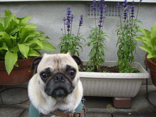 花と由紀夫