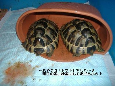 S-DSCF9546.jpg