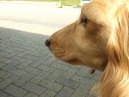 2008_05280019.jpg