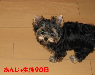 IMG_0052 ①