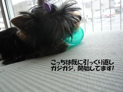 P1020839 ⑤