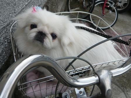 bicycle_1.jpg