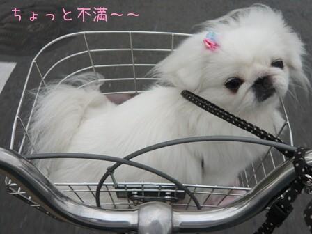 bicycle_6.jpg