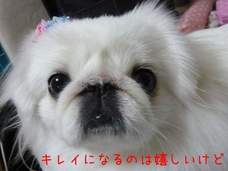 groom_momo3.jpg