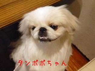 malibuoff_tanpopo.jpg