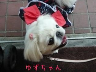 malibuoff_yuzu.jpg