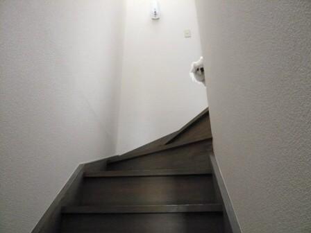 momo_on_stairs.jpg