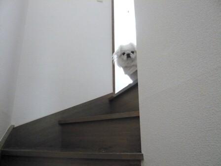 momo_on_stairs2.jpg