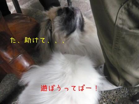 tamapla_mokemomo.jpg