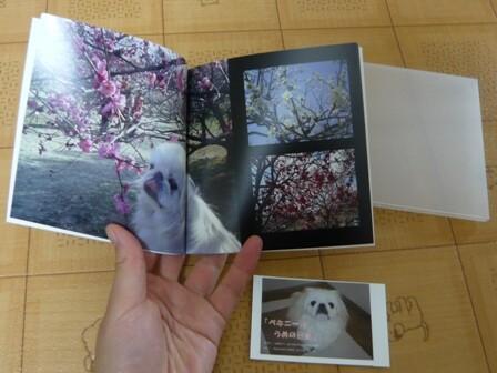 yoyogi_album.jpg