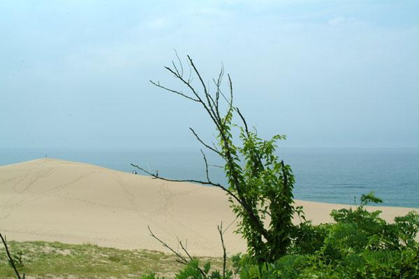 鳥取砂丘と緑