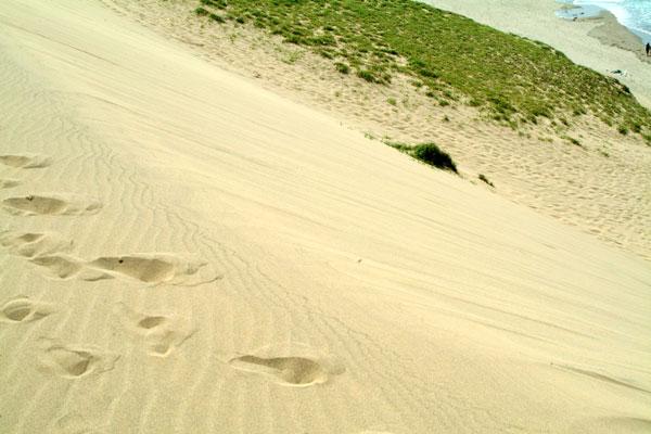 鳥取砂丘海岸