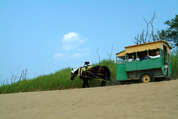鳥取砂丘馬車